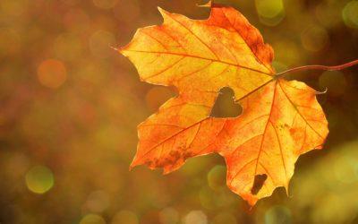 Jak wspomagać odporność jesienią i zimą